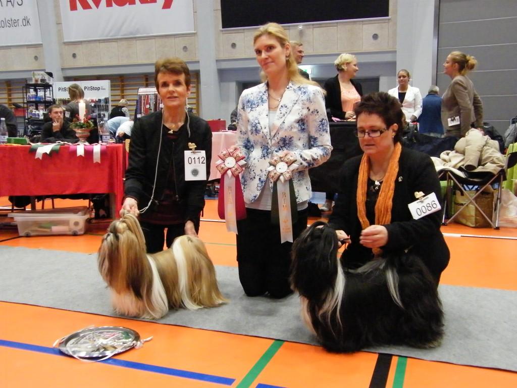 BIR: Sannie's S-Anke Kini - BIM: Ziams Money Talks (S) Dommer: Asta Maria Gudbergsdottir, Island.