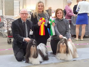 BIR: Scirocco's A Touch of High Mystery - BIM: Scirocco's Wanna-B-Your Teddy Bear Dommer: Jeanette Ammentorp Bengtsen, DK