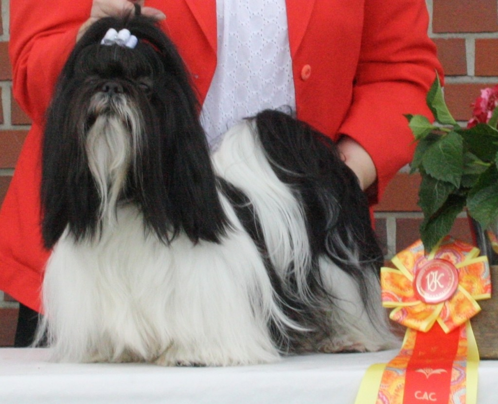 Tysk Champion DECH Ziams Lovely Lady Ejer: Connie Bo Jonnsson Opdrætter: Kennel Ziams (S)