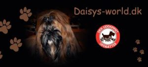 daisysworld