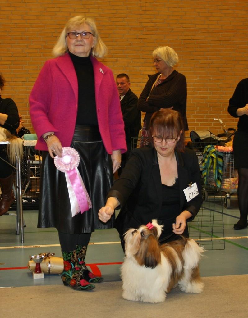 Hvalpeklasse BIR Danish Spirits Aim For The Stars