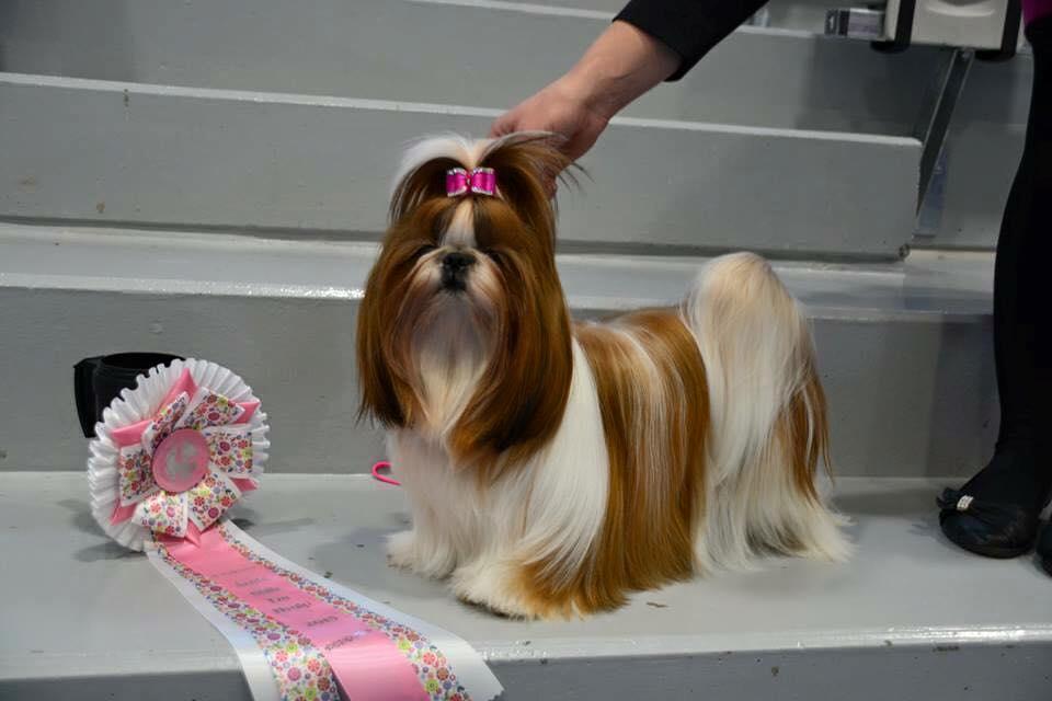Miss BeLund's Always a Summer Note puppy 2015